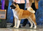 BISS GCH-B Crown Royal's Start'N A Revolution  ROM